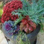 mum-planter