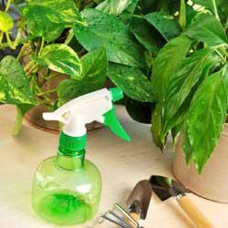 HumidityforHouseplant_1