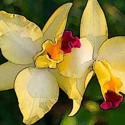 caring-orchid-3