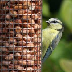feeding-birds-winter-2